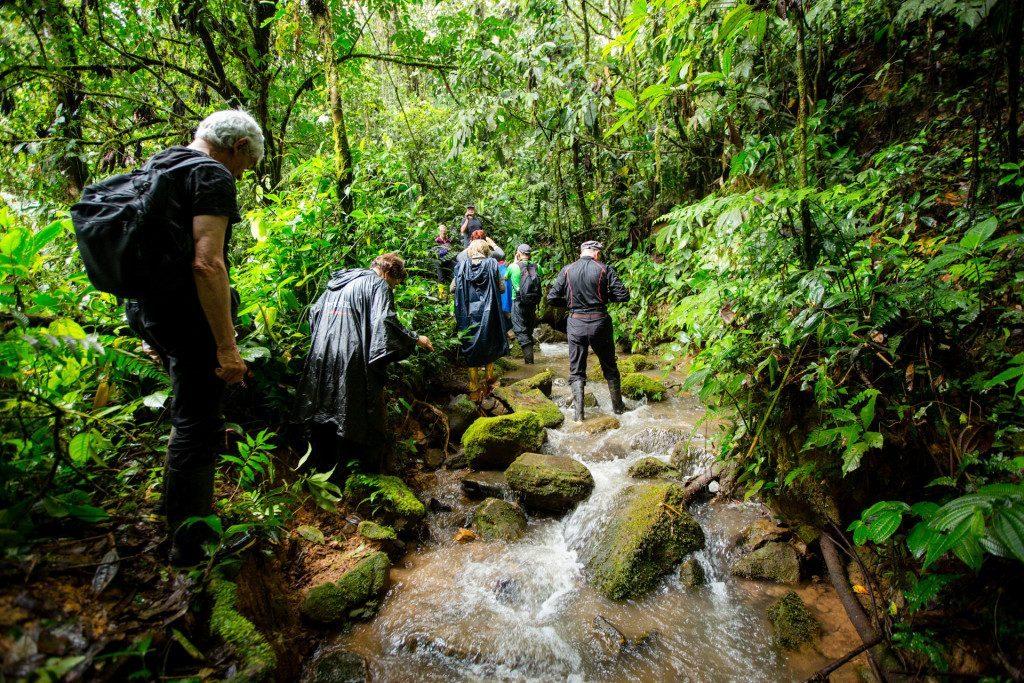 Auf der Erkundungstour im Regenwald sollte ein Regenponcho unbedingt dabei sein!