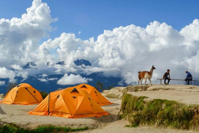 Lamas sind auf dem Inkatrail keine seltene Begegnung!